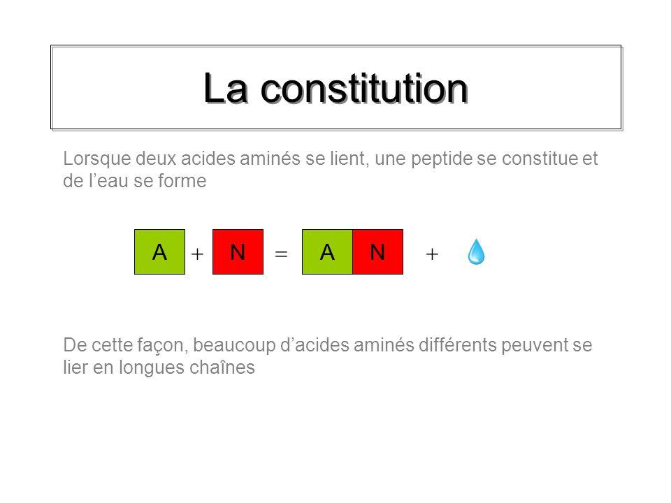 La constitution 1 acide aminé + 1 acide aminé = Dipeptides AN On classe les chaînes de peptides selon le nombre dacides aminés AN