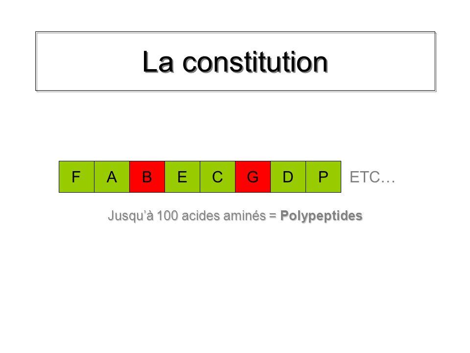 La constitution Plus de 100 acides aminés = Protéines B A M E