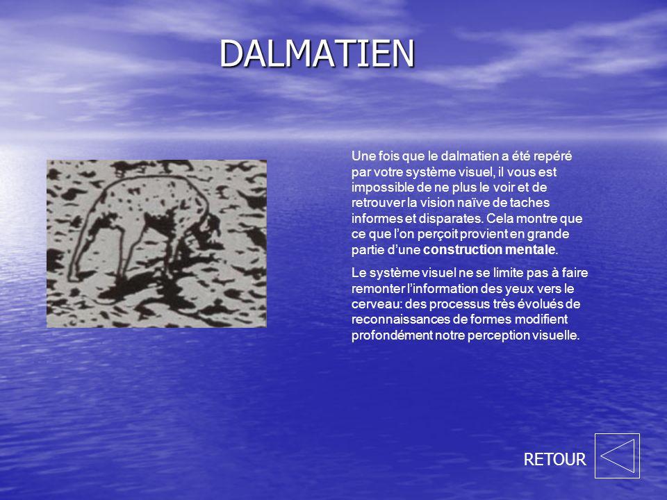 DALMATIEN Une fois que le dalmatien a été repéré par votre système visuel, il vous est impossible de ne plus le voir et de retrouver la vision naïve de taches informes et disparates.