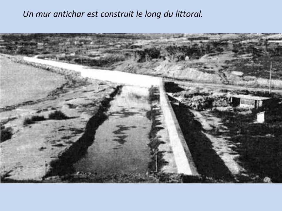 Un mur antichar est construit le long du littoral.