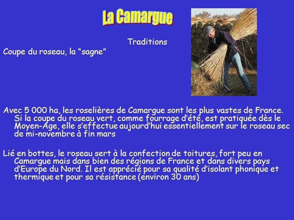 Traditions Coupe du roseau, la sagne Avec 5 000 ha, les roselières de Camargue sont les plus vastes de France.