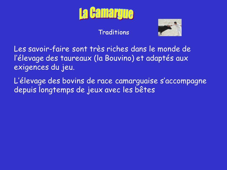 Traditions Les savoir-faire sont très riches dans le monde de lélevage des taureaux (la Bouvino) et adaptés aux exigences du jeu.