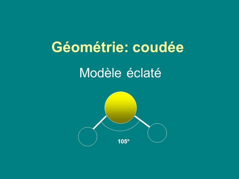 Géométrie: coudée Modèle éclaté 105°