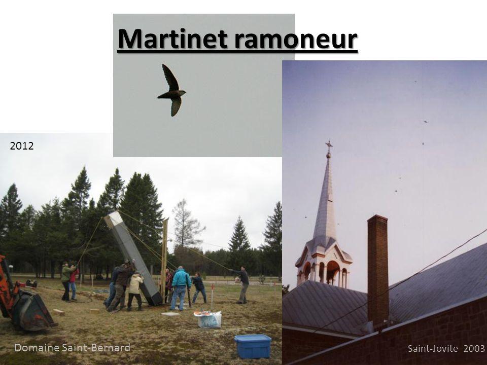 Martinet ramoneur 2012 Saint-Jovite 2003 Domaine Saint-Bernard