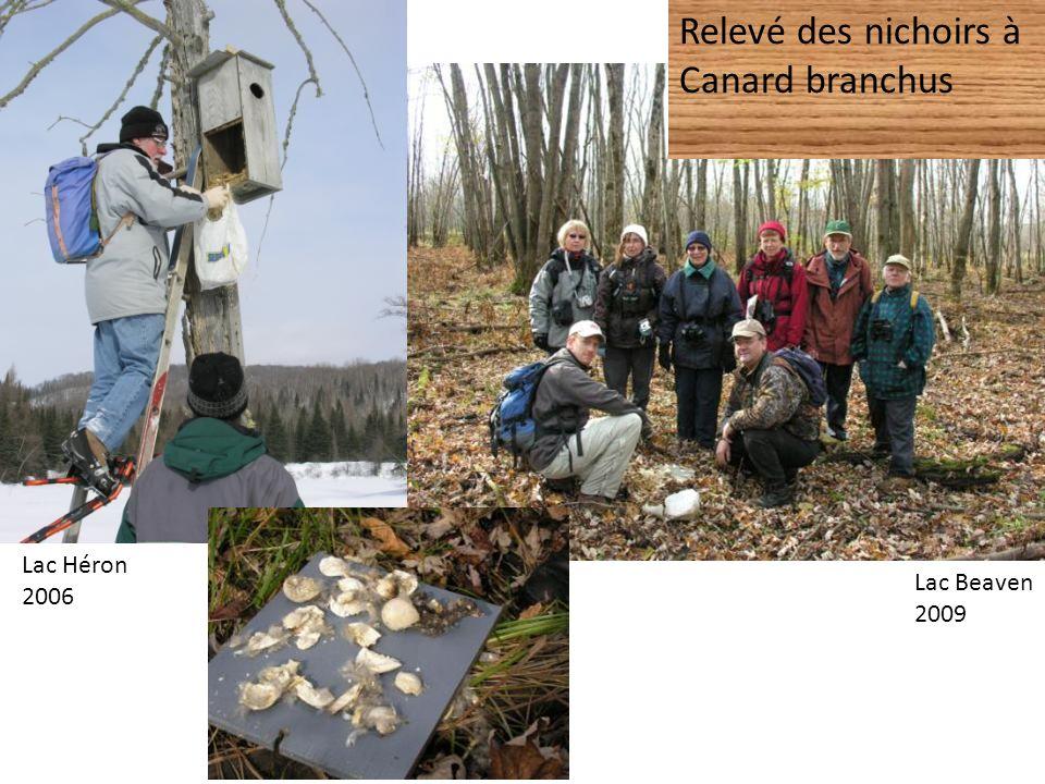 Chronique ornithologique de lInformation du Nord Printemps 2011 à juin 2012