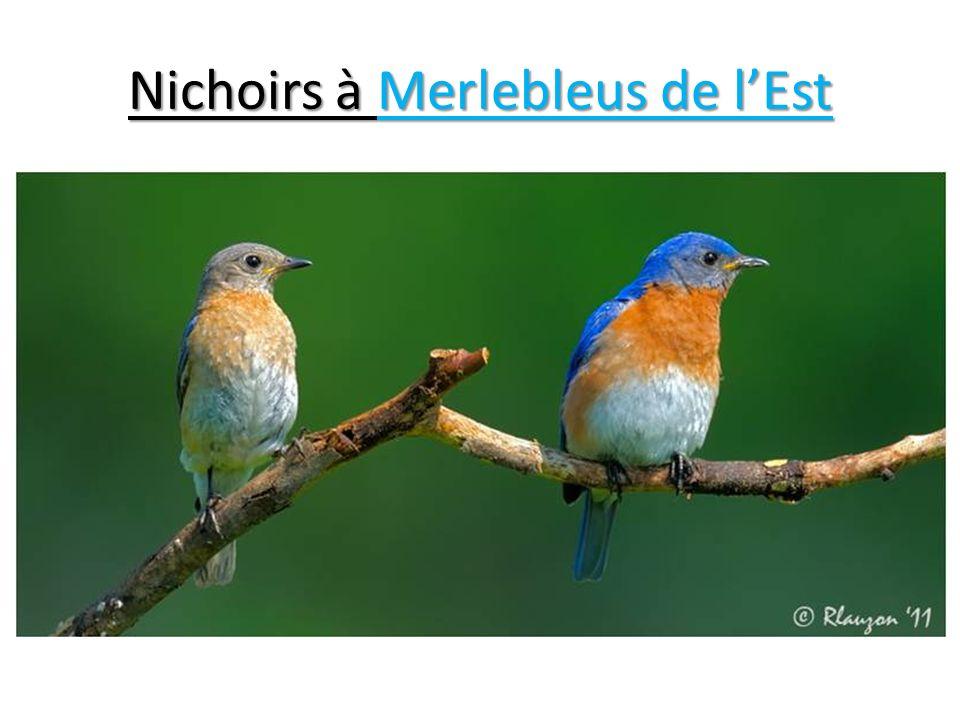 Nichoirs à Merlebleus de lEst