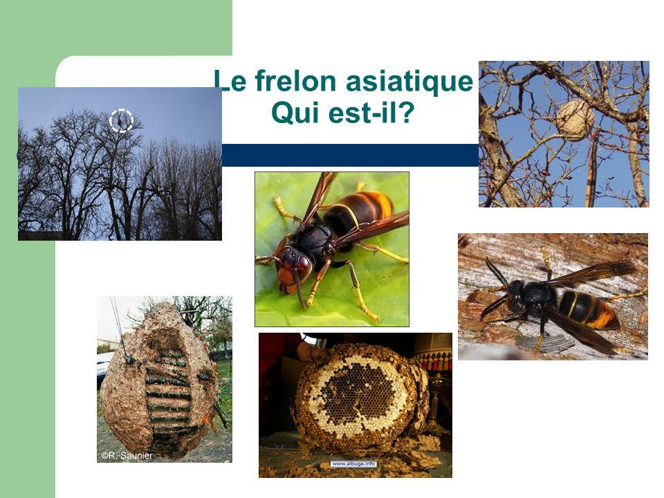Progression du frelon asiatique 2004-2011 Source: MNHN