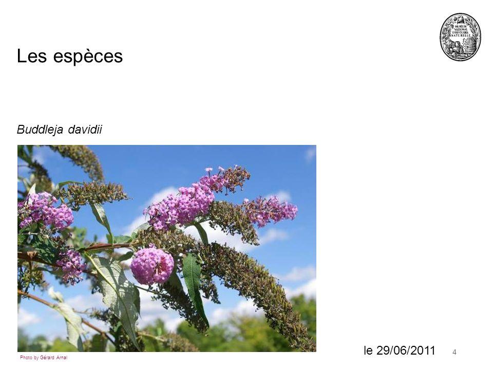 418 juin 2010 Buddleja davidii Les espèces Photo by Gérard Arnal le 29/06/2011