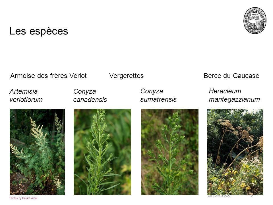 518 juin 2010 Les espèces Artemisia verlotiorum Conyza canadensis Conyza sumatrensis Heracleum mantegazzianum Photos by Gérard Arnal Armoise des frères VerlotVergerettesBerce du Caucase