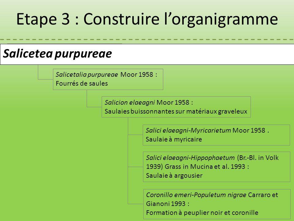Salicetea purpureae Moor 1958 : Fourrés de saules Salicion elaeagni Moor 1958 : Saulaies buissonnantes sur matériaux graveleux Salicetalia purpureae M