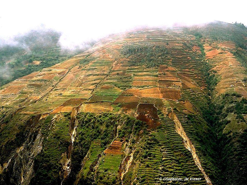 Diagnostic Haïti a presque épuisé ses forêts, la RD en a conservé 1/3 Cercle vicieux: expansion agricole – bois de feu comme revenu d appoint, déforestation, érosion, dégradation, pauvreté, vulnérabilité Explication.