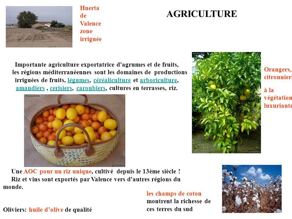 Oliviers: huile dolive de qualité Importante agriculture exportatrice d agrumes et de fruits, les régions méditerranéennes sont les domaines de productions irriguées de fruits, légumes, céréaliculture et arboriculture, amandiers, cerisiers, caroubiers, cultures en terrasses, riz.légumescéréaliculturearboriculture amandierscerisierscaroubiers Orangers, citronniers les champs de coton montrent la richesse de ces terres du sud Huerta de Valence zone irriguée à la végétation luxuriante Une AOC pour un riz unique, cultivé depuis le 13ème siècle .