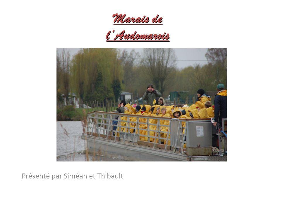 Marais de lAudomarois Présenté par Siméan et Thibault