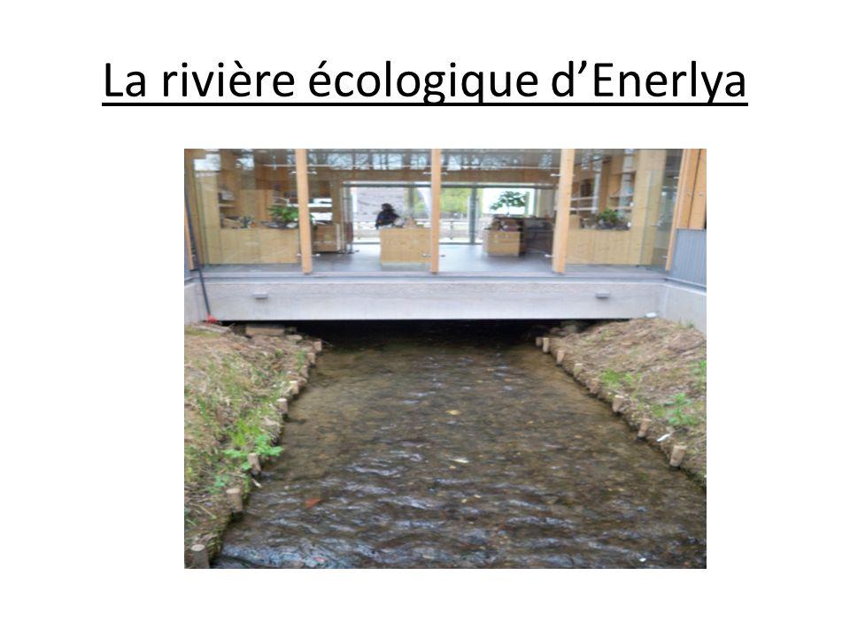 La rivière écologique dEnerlya