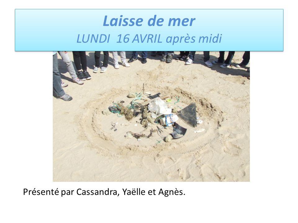 Laisse de mer LUNDI 16 AVRIL après midi Laisse de mer LUNDI 16 AVRIL après midi Présenté par Cassandra, Yaëlle et Agnès.