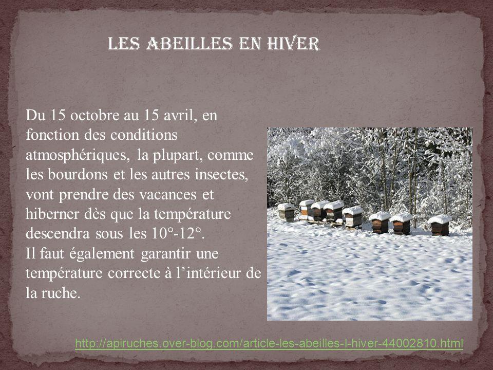 Les abeilles en hiver Du 15 octobre au 15 avril, en fonction des conditions atmosphériques, la plupart, comme les bourdons et les autres insectes, von