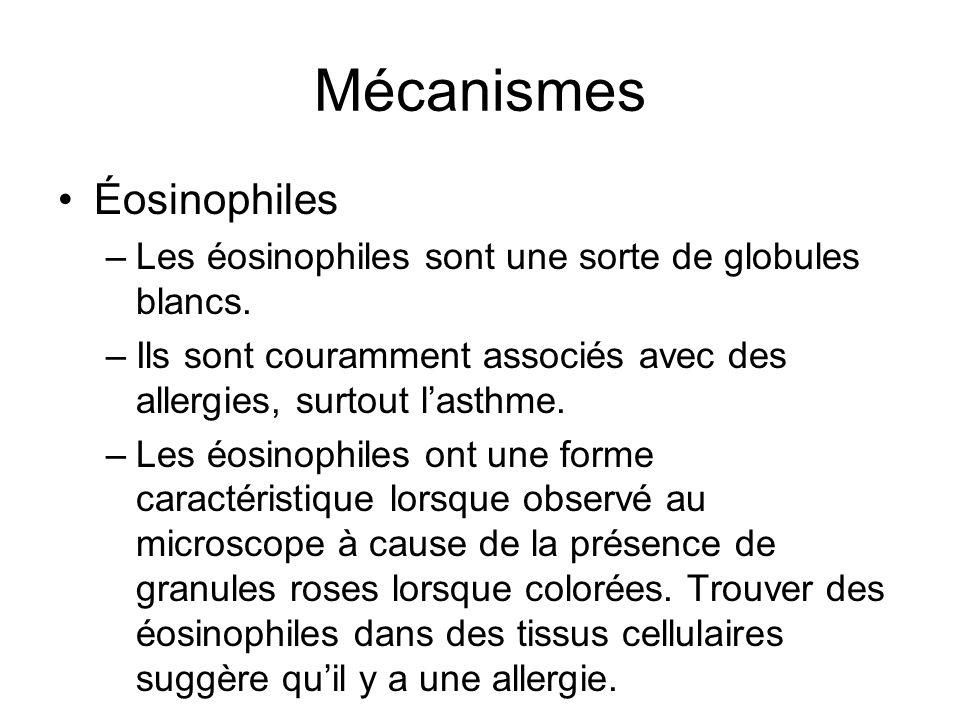 Mécanismes Éosinophiles –Les éosinophiles sont une sorte de globules blancs. –Ils sont couramment associés avec des allergies, surtout lasthme. –Les é