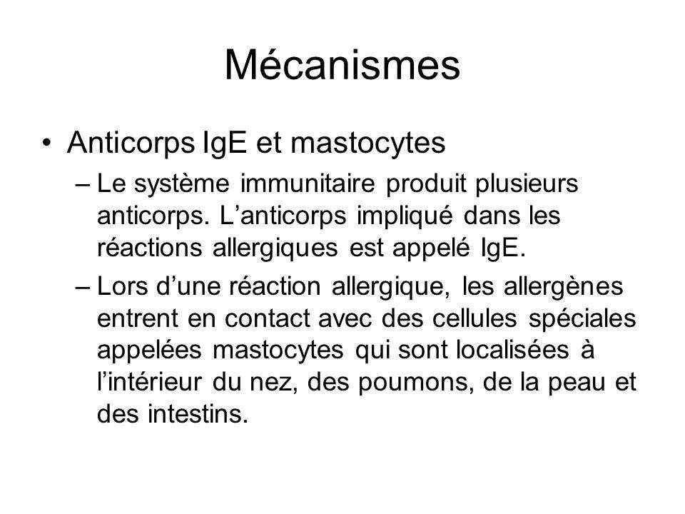 Mécanismes Anticorps IgE et mastocytes –Lanticorps IgE attachés aux mastocytes vont déclencher la libération des plusieurs agents incluant lhistamine, résultant en un inflammation et les symptômes dallergie.