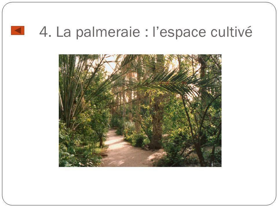 4. La palmeraie : lespace cultivé