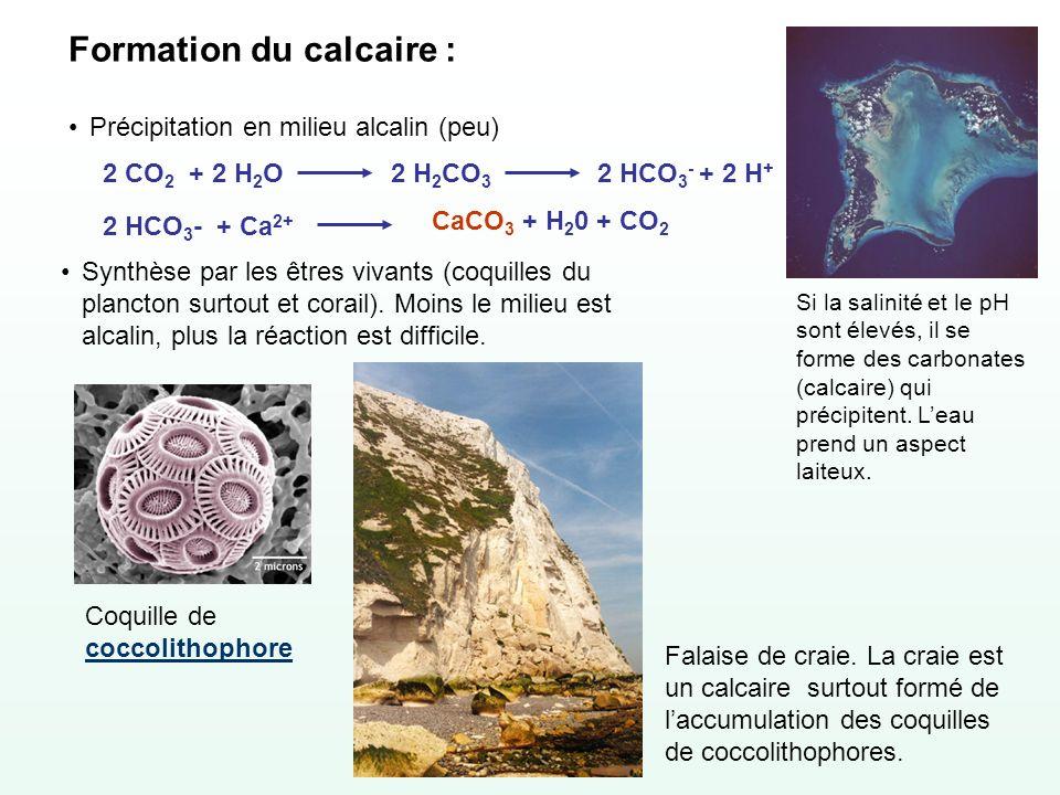 Formation du calcaire : Précipitation en milieu alcalin (peu) 2 HCO 3 - + Ca 2+ CaCO 3 + H 2 0 + CO 2 2 CO 2 + 2 H 2 O2 H 2 CO 3 2 HCO 3 - + 2 H + Syn