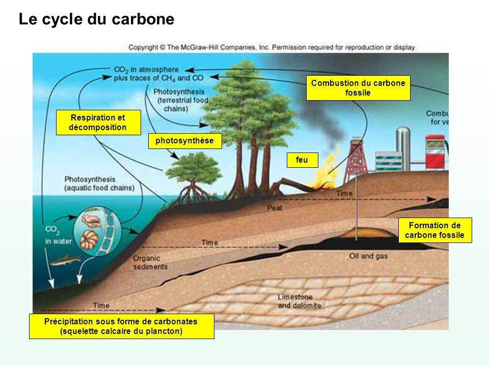 Le cycle du carbone feu Respiration et décomposition photosynthèse Combustion du carbone fossile Précipitation sous forme de carbonates (squelette cal