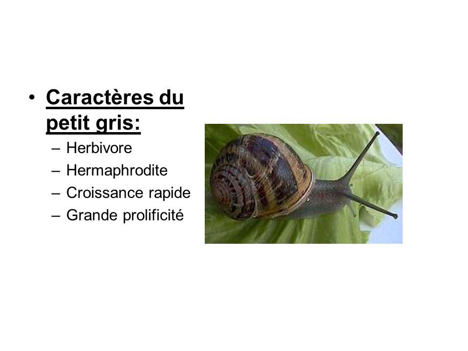 II.Les différentes étapes de lélevage des escargots différentes méthodes délevage: –élevage mixte –hors-sol –à l italienne Choix de lespèce: Helix aspersa aspersa, le Petit-Gris (environ 10g) Cycle délevage: –Hibernation –Activité saisonnière: Mars à Octobre ou Septembre à Mai selon le climat (lhémisphère nord)