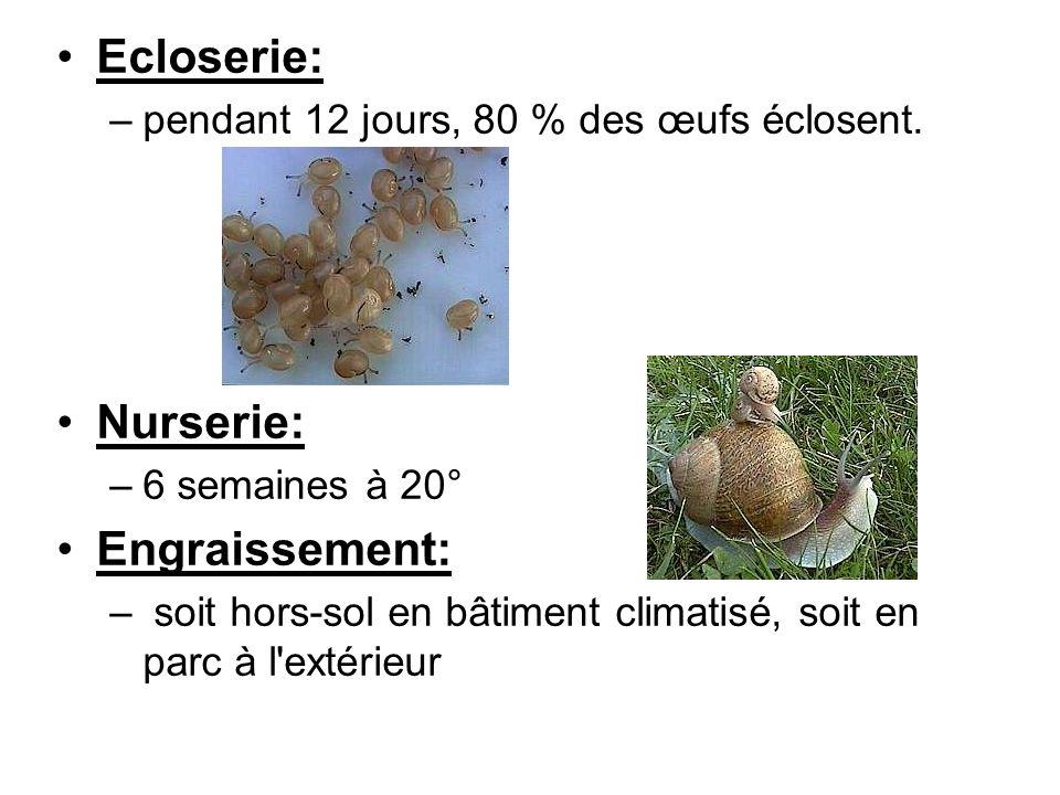 Récolte: –premiers bordés 10 à 12 semaines après éclosion =taille adulte.