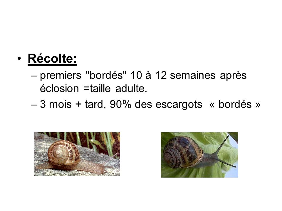 Conclusion: –croissance:dans la nature: 1à 2 ans en élevage: 4 à 6 mois en laboratoire: 3 à 5 mois –+ reproduction et hibernation=>intervalle entre 2 générations: 1 an