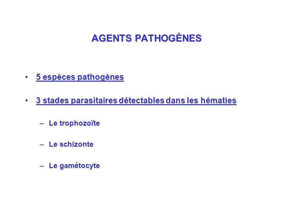 AGENTS PATHOGÈNES 5 espèces pathogènes5 espèces pathogènes 3 stades parasitaires détectables dans les hématies3 stades parasitaires détectables dans les hématies –Le trophozoïte –Le schizonte –Le gamétocyte