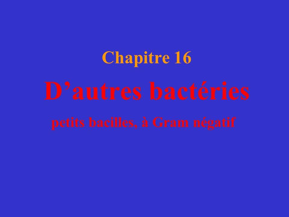Chapitre 16 Dautres bactéries petits bacilles, à Gram négatif