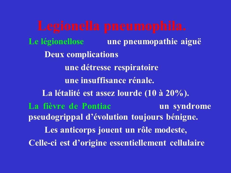Legionella pneumophila. Le légionellose une pneumopathie aiguë Deux complications une détresse respiratoire une insuffisance rénale. La létalité est a