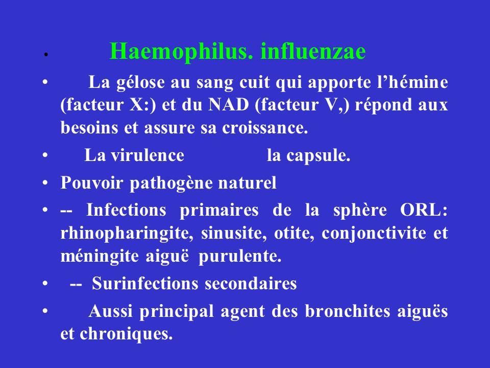 Haemophilus. influenzae La gélose au sang cuit qui apporte lhémine (facteur X:) et du NAD (facteur V,) répond aux besoins et assure sa croissance. La