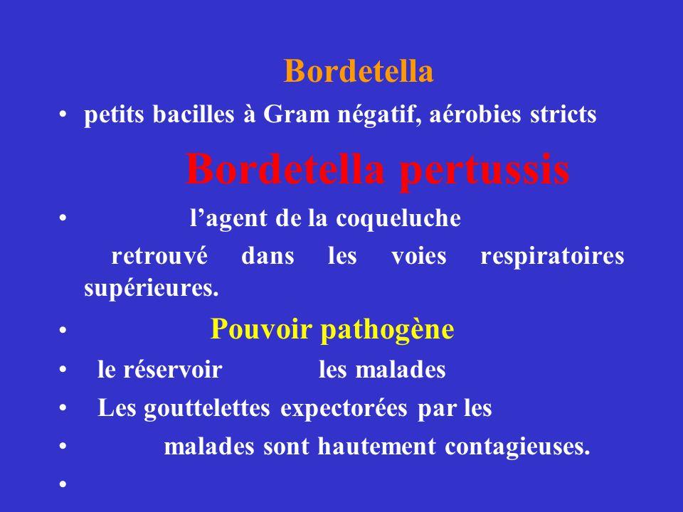Bordetella petits bacilles à Gram négatif, aérobies stricts Bordetella pertussis lagent de la coqueluche retrouvé dans les voies respiratoires supérieures.