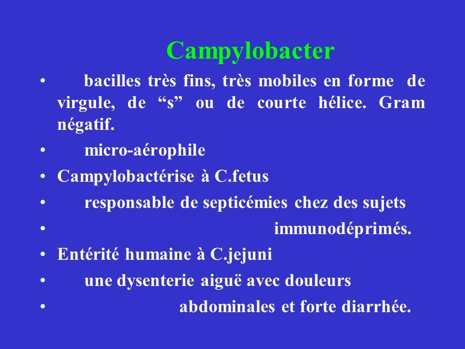 Campylobacter bacilles très fins, très mobiles en forme de virgule, de s ou de courte hélice. Gram négatif. micro-aérophile Campylobactérise à C.fetus