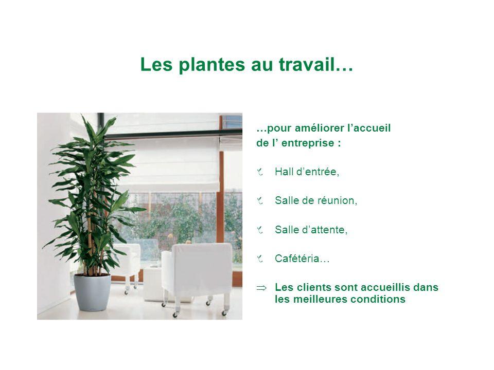 Les plantes au travail… …pour améliorer laccueil de l entreprise : Hall dentrée, Salle de réunion, Salle dattente, Cafétéria… Les clients sont accueillis dans les meilleures conditions