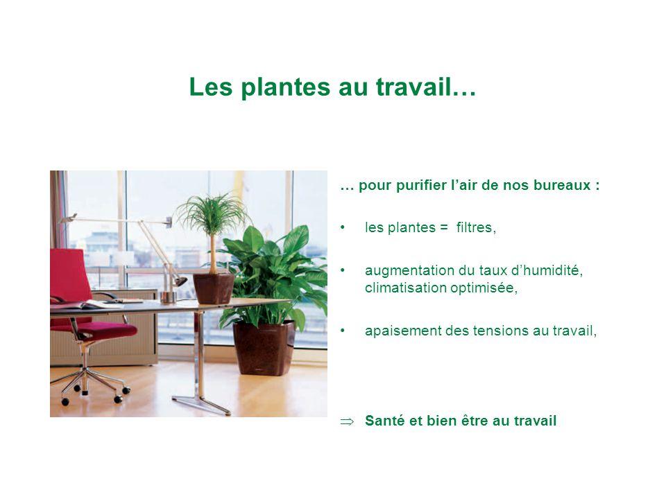 Les plantes au travail… … pour purifier lair de nos bureaux : les plantes = filtres, augmentation du taux dhumidité, climatisation optimisée, apaisement des tensions au travail, Santé et bien être au travail