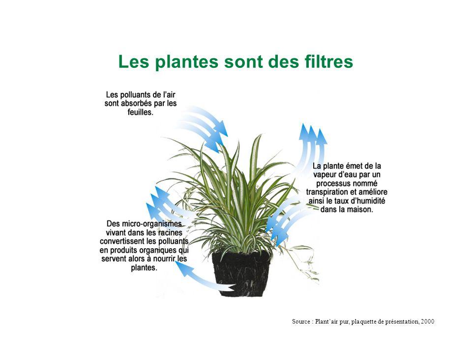 Les plantes sont des filtres Source : Plantair pur, plaquette de présentation, 2000