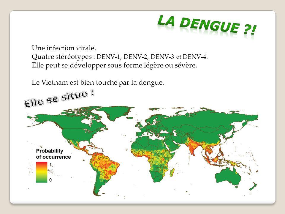 Une infection virale.Quatre stéréotypes : DENV-1, DENV-2, DENV-3 et DENV-4.