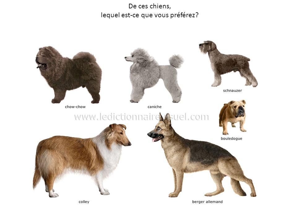 De ces chiens, lequel est-ce que vous préférez?