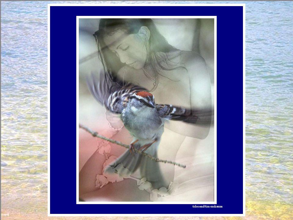 Le lendemain, départ pour Le Grand Canyon. Un oiseau, petit celui-là, l'attendait, prit son envol.