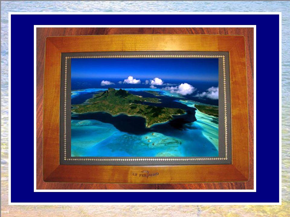 La perle de Polynésie, habituée au lagon bleu, n'apprécia pas la grisaille de Paris. La larme commençait à s'agiter, la fleur à son tour voulut quitte
