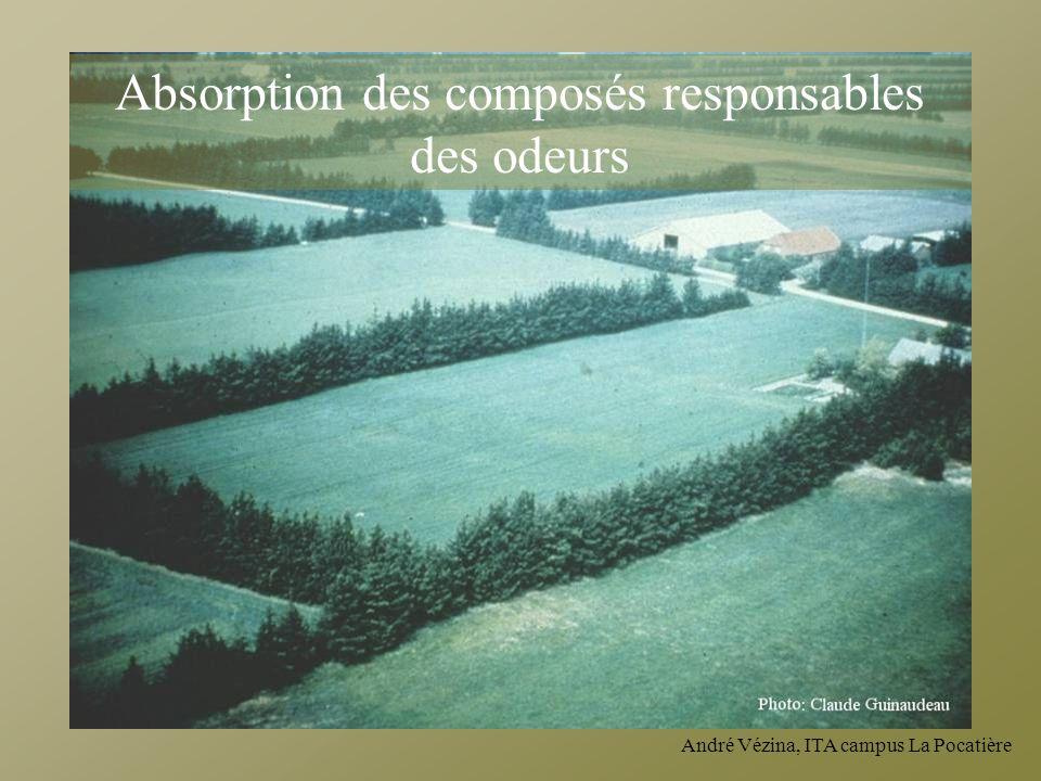 André Vézina, ITA campus La Pocatière Absorption des composés responsables des odeurs