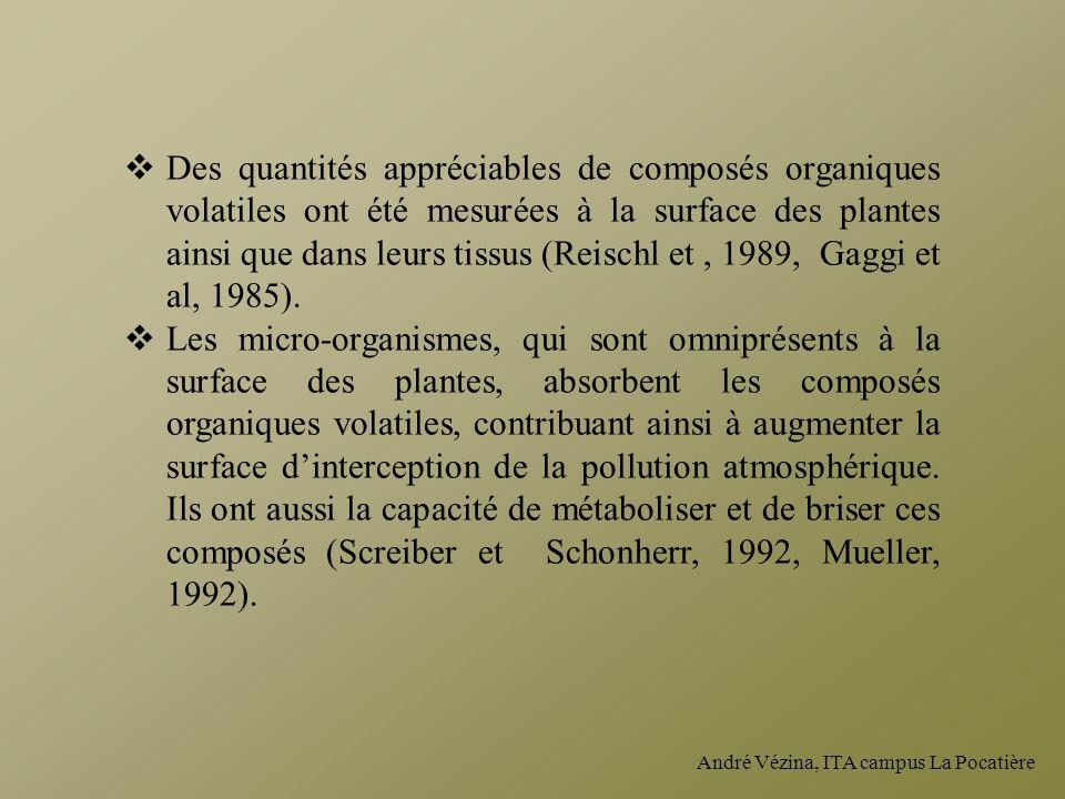 André Vézina, ITA campus La Pocatière Des quantités appréciables de composés organiques volatiles ont été mesurées à la surface des plantes ainsi que