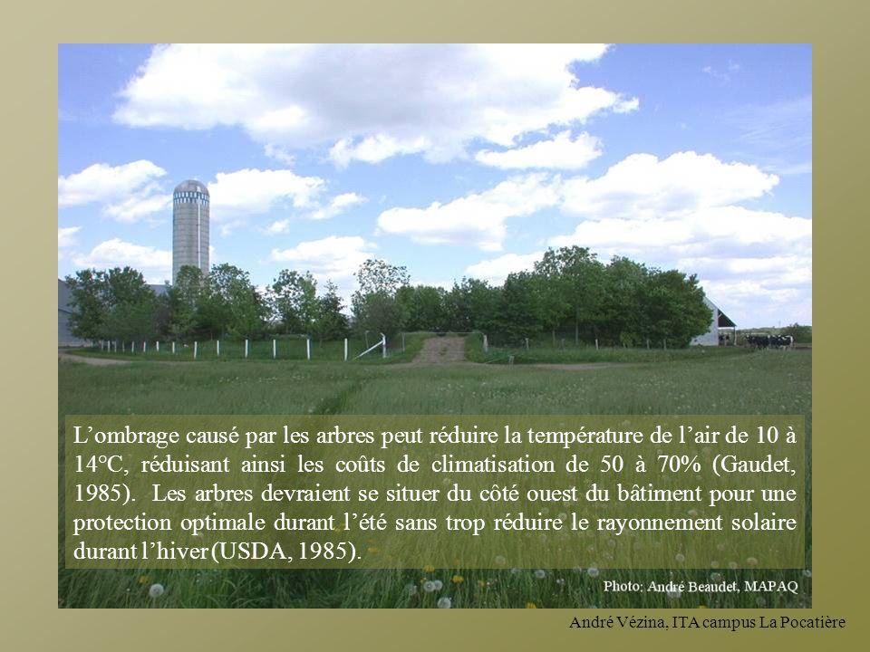 André Vézina, ITA campus La Pocatière Lombrage causé par les arbres peut réduire la température de lair de 10 à 14°C, réduisant ainsi les coûts de cli