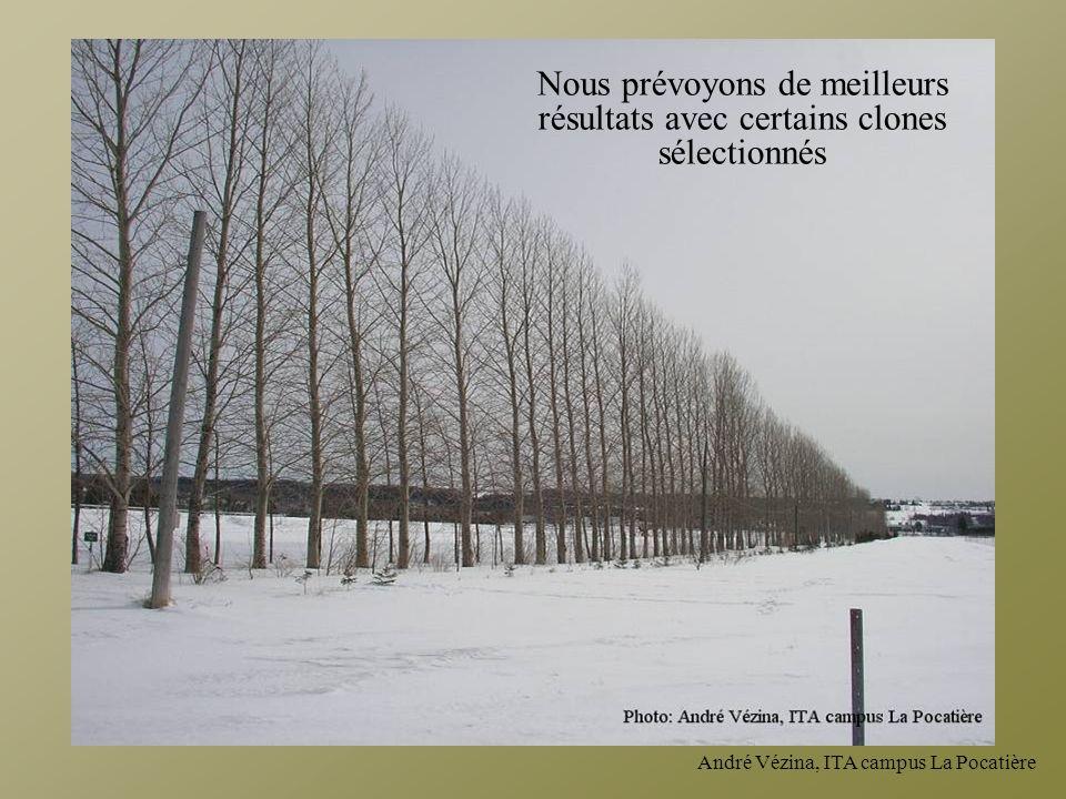 André Vézina, ITA campus La Pocatière Nous prévoyons de meilleurs résultats avec certains clones sélectionnés