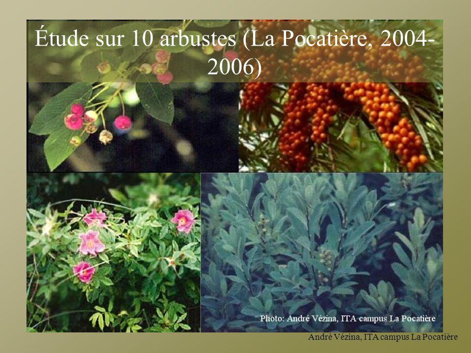André Vézina, ITA campus La Pocatière Étude sur 10 arbustes (La Pocatière, 2004- 2006)