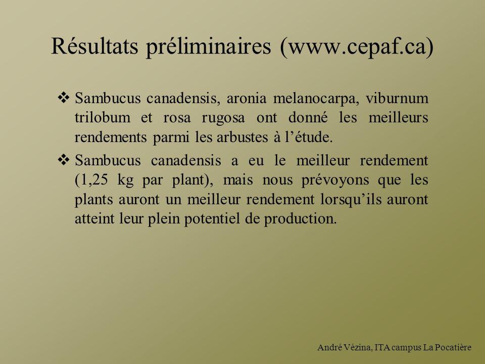 André Vézina, ITA campus La Pocatière Résultats préliminaires (www.cepaf.ca) Sambucus canadensis, aronia melanocarpa, viburnum trilobum et rosa rugosa