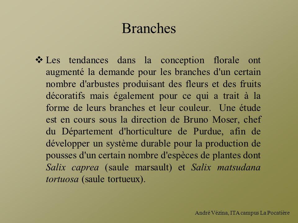André Vézina, ITA campus La Pocatière Branches Les tendances dans la conception florale ont augmenté la demande pour les branches d'un certain nombre