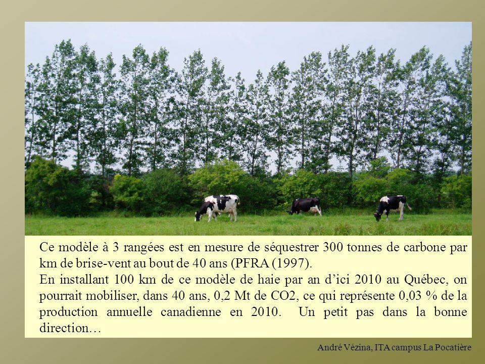 André Vézina, ITA campus La Pocatière Ce modèle à 3 rangées est en mesure de séquestrer 300 tonnes de carbone par km de brise-vent au bout de 40 ans (