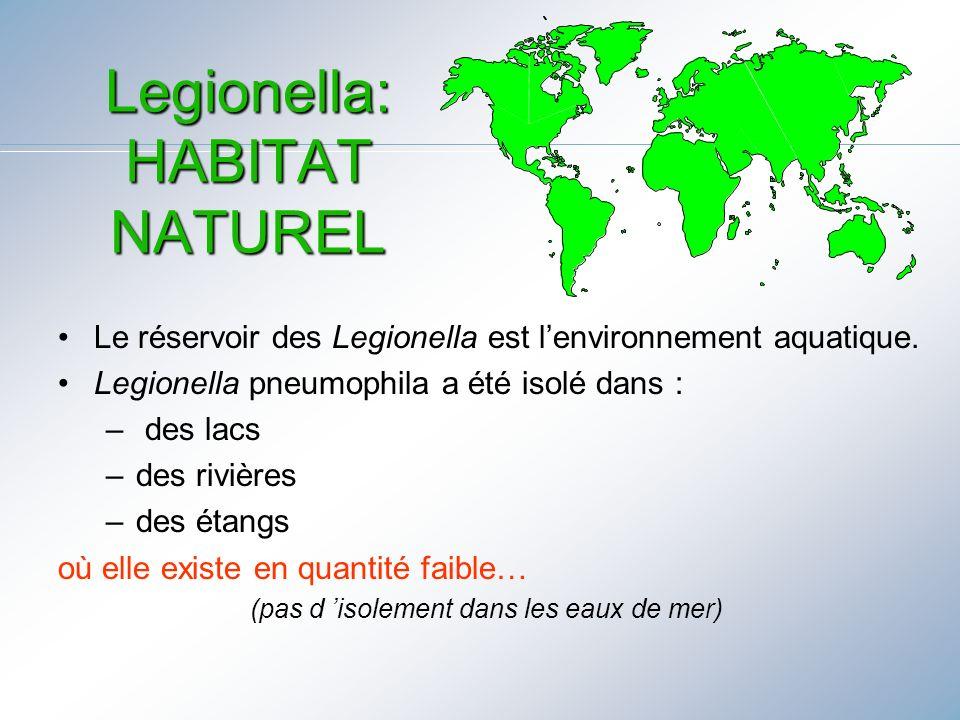 Legionella: HABITAT NATUREL Le réservoir des Legionella est lenvironnement aquatique. Legionella pneumophila a été isolé dans : – des lacs –des rivièr